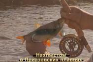 прогноз рыбалки в геленджике